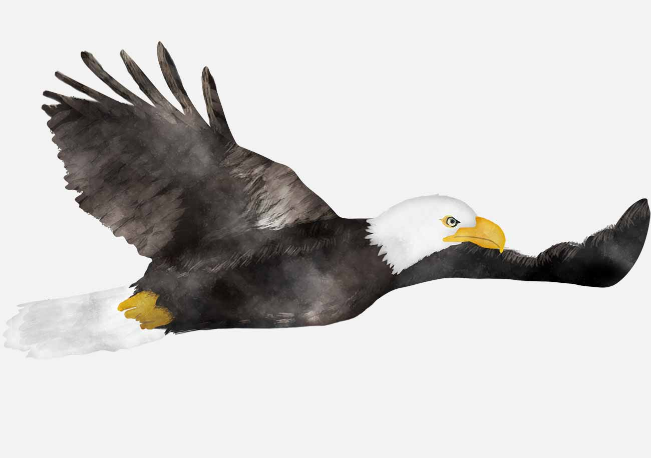 Telecast Eagle and tails: all seasons. Eagle and tails: list of issues of the last season 87